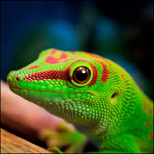 Kiusi ReptiliaPhoto