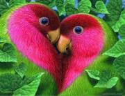 Parrot 2Photo